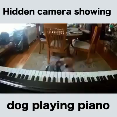 Sing Us A Song Your The Piano Dog Video Cute Baby Animals Cute Funny Animals Cute Animals