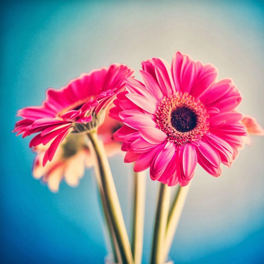 Summer, Flower