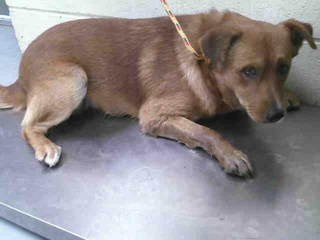 Meet Little Bear A Petfinder Adoptable Border Collie Dog Conroe