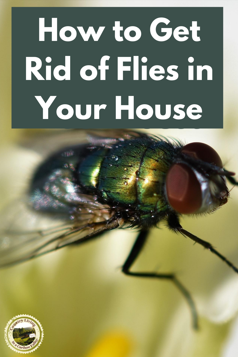 0fd6b7da590f83e40231ec28e0a09ae0 - How To Get Rid Of Green Flies In The House