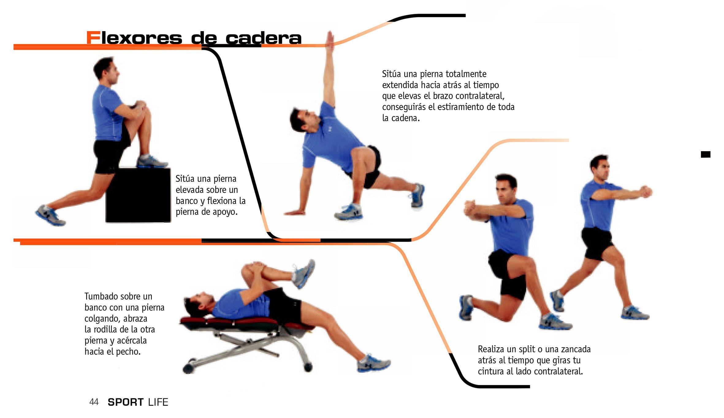 Flexores la musculos pdf de pierna