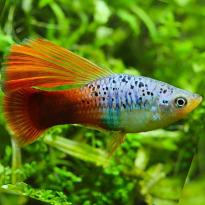 Tropical Aquarium Community Fish Aquatics To Your Door Aquarium Fish Tropical Fish Tropical Fish Aquarium
