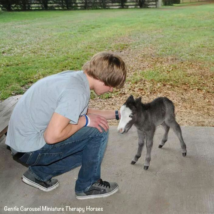 Gentle Carousel Miniature Therapy Horses. .