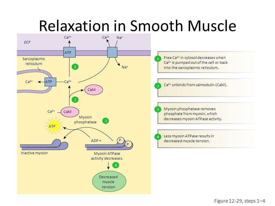 slide_24.jpg (960×720) | Systems: Gastrointestinal | Pinterest