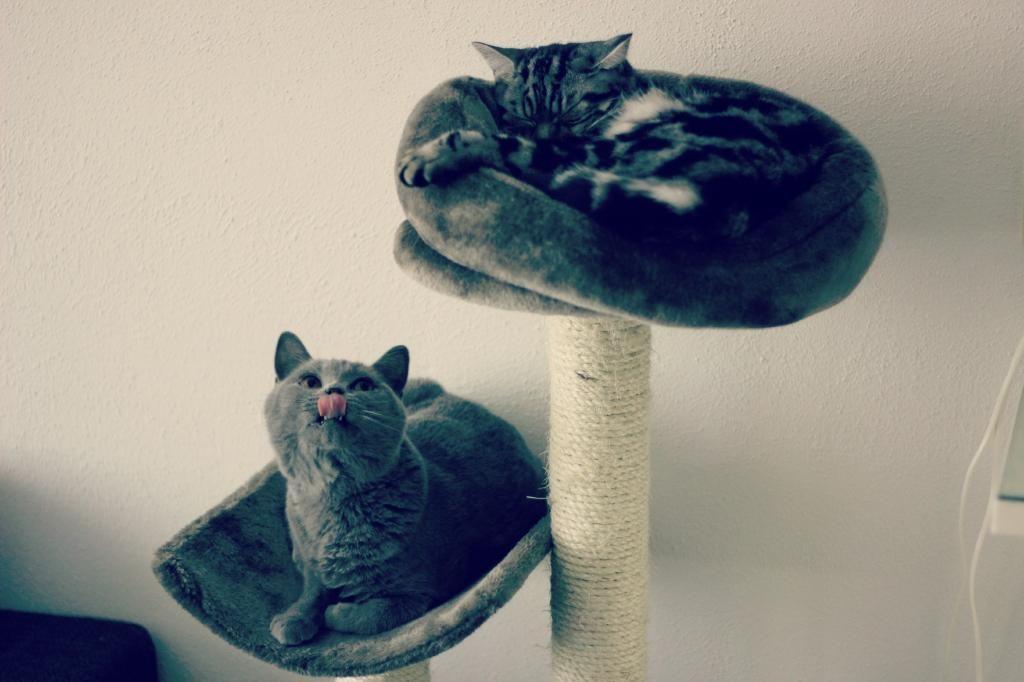 Wanneer je katten liefde erge vormen aanneemt..