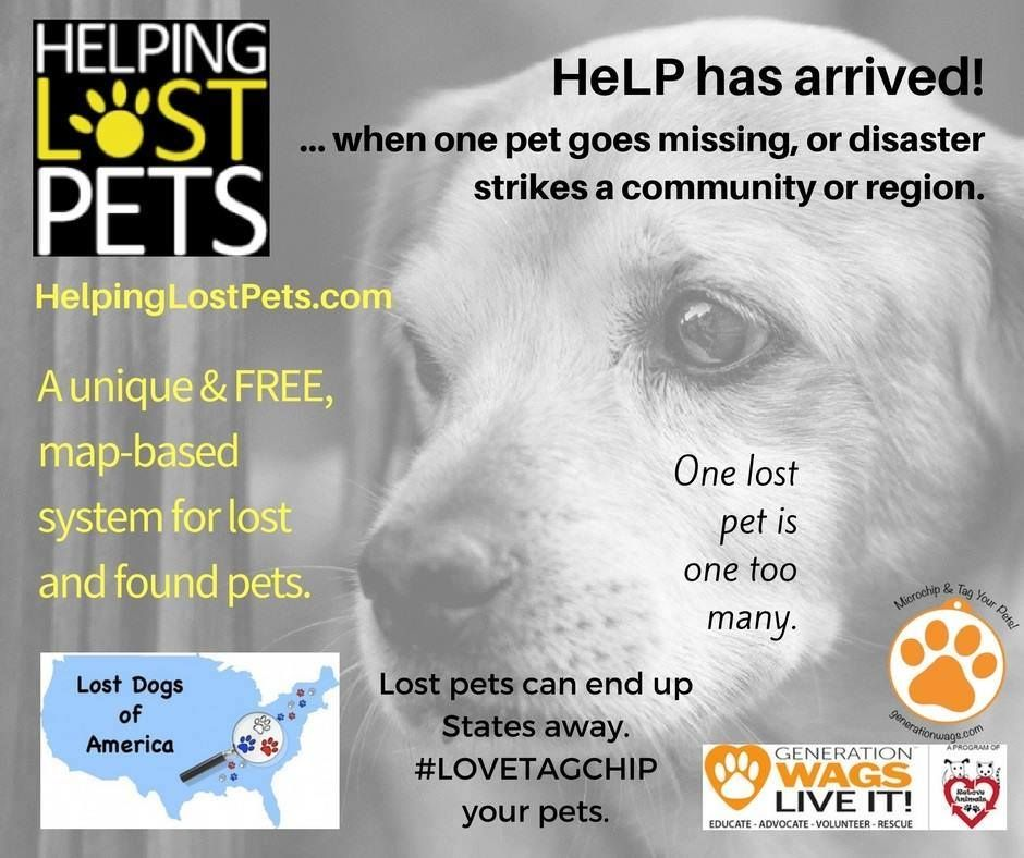 How To Document And Track Lost Pets In A Disaster Such As Recent