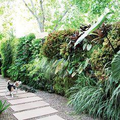.ψ.Ψψψ.. how to plant a vertical garden : http://www.sunset.com/garden/landscaping-design/how-to-plant-vertical-garden-wall-00400000064854/