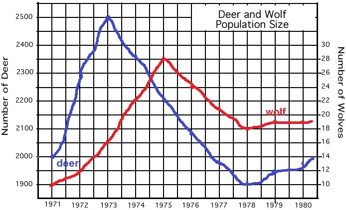 Deer Predation Or Starvation With Images Graphing Happy Kids