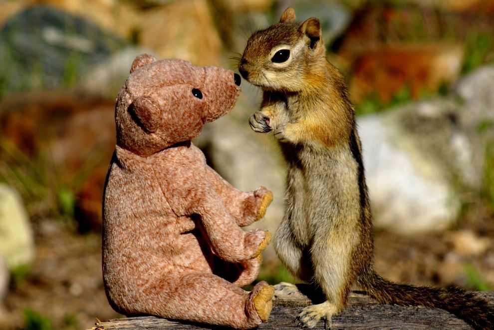 Stop What You're Doing And Look At This Chipmunk Giving A Teddy Bear Kisses
