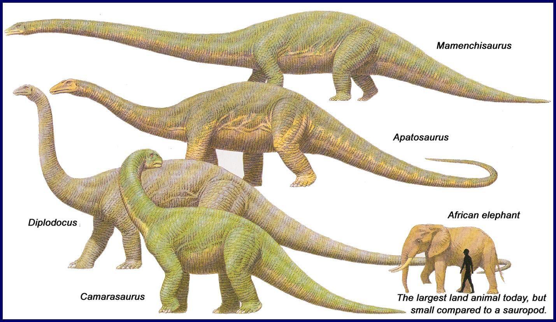 apatosaurus vs diplodocus - HD1024×768