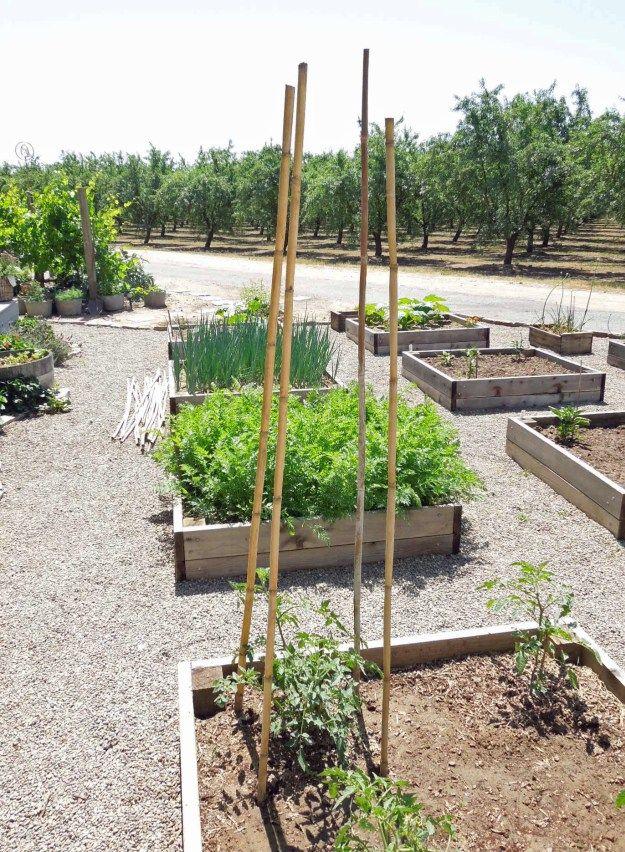 Bamboo Tomato Cage Tutorial Garden Trellis Tomato Cages 400 x 300