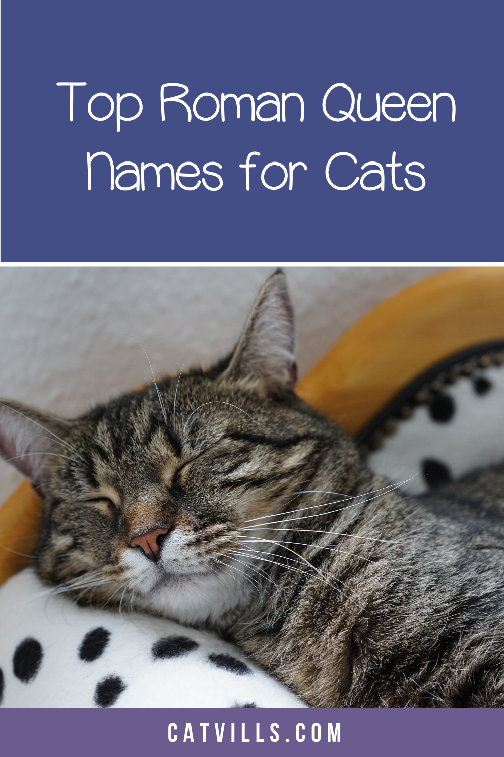 Girl Cat Names 250 Female Cat Names You Will Love by