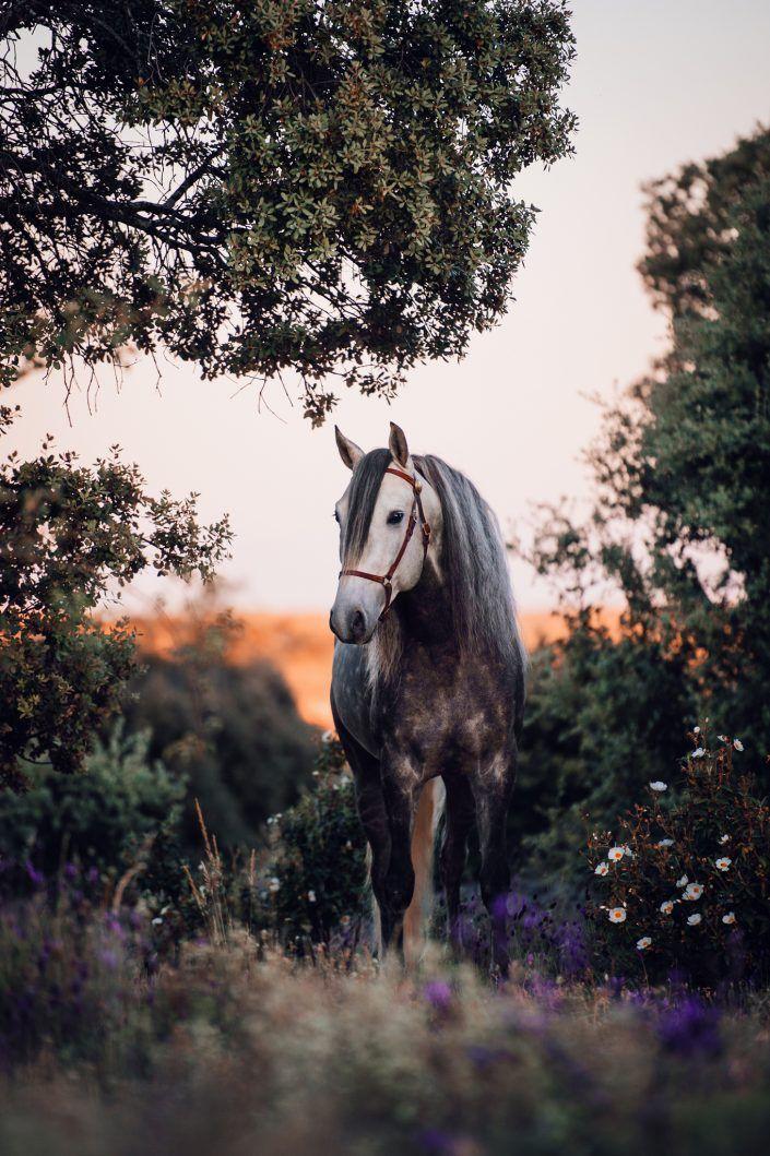 Fotos Pferde In Der Natur I Anna Ibelshauser Pferde Hintergrundbilder Pferde Schonste Pferde