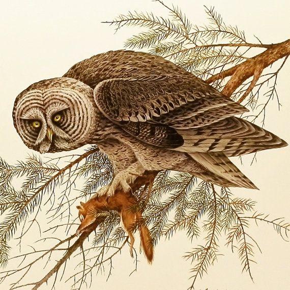 Vintage Owl Print Realistic Drawings Owl Illustration Owl Art
