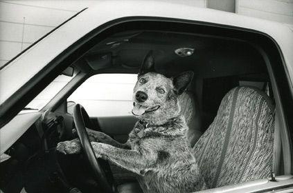 Wrangler Driving Car