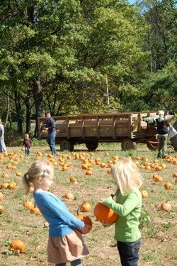 Wightmans Farm Morristown Hay Rides Pumpkin Picking Pumpkin