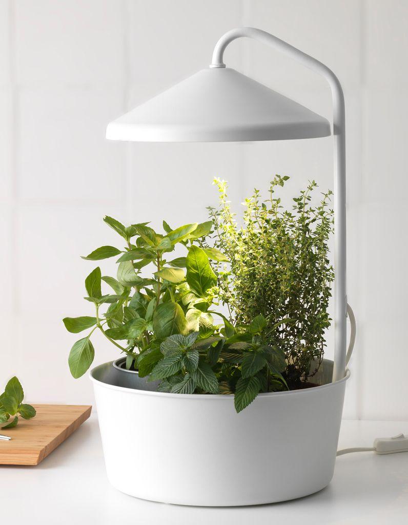 lampes chauffantes pour plantes