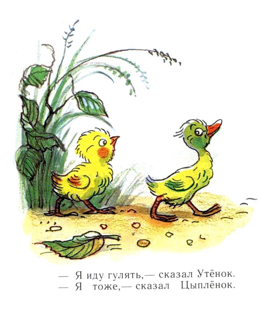иллюстрации к сказке сутеева утенок и цыпленок почему
