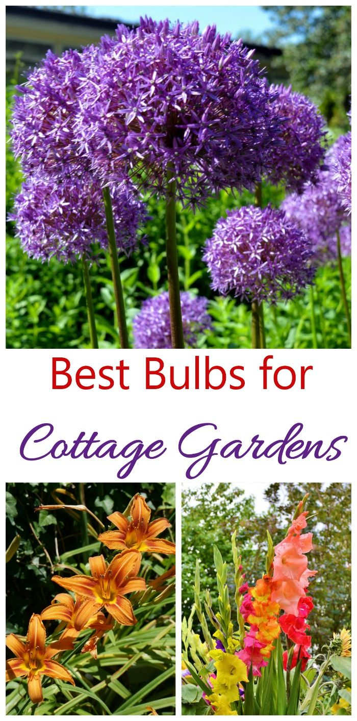 Cottage Garden Plants Perennials Annuals Bulbs For Cottage