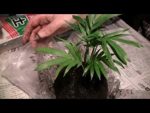 deko mit bonsai pflanzen moosb lle zum aufh ngen selber machen how to home sweet home. Black Bedroom Furniture Sets. Home Design Ideas