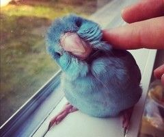 birdyyyy
