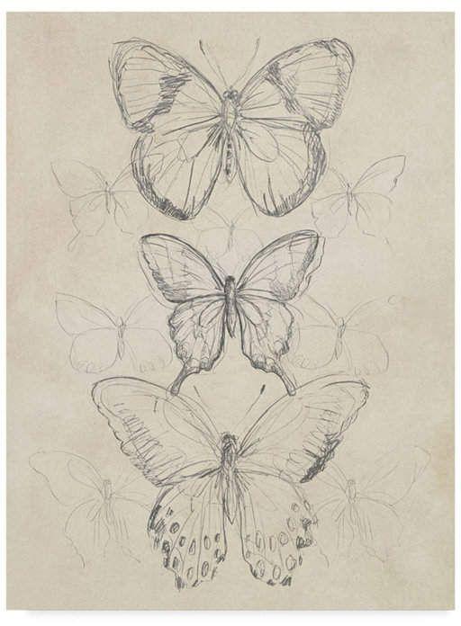 Trademark Global June Erica Vess Vintage Butterfly Sketch I Canvas Art - 20