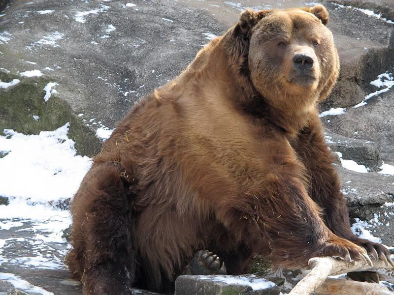 Royal Lion Mens Tank Top Giant Panda Bear Majesty
