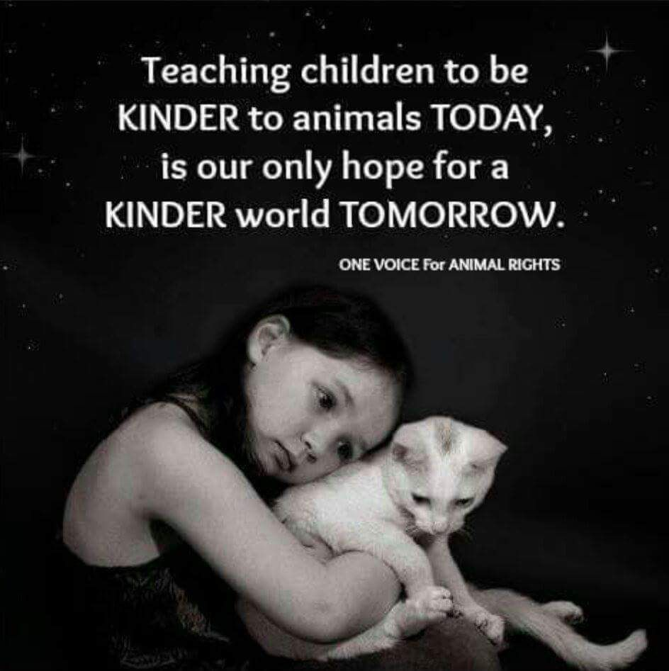 Teach Children To Be Kind To Animals Animal Rights Animal Quotes Animal Advocacy