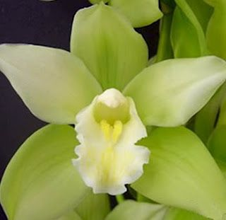 Flowers By Erin Fresh And Lovely Green Flower Ideas Cymbidium Orchids Amazing Flowers Orchid Flower