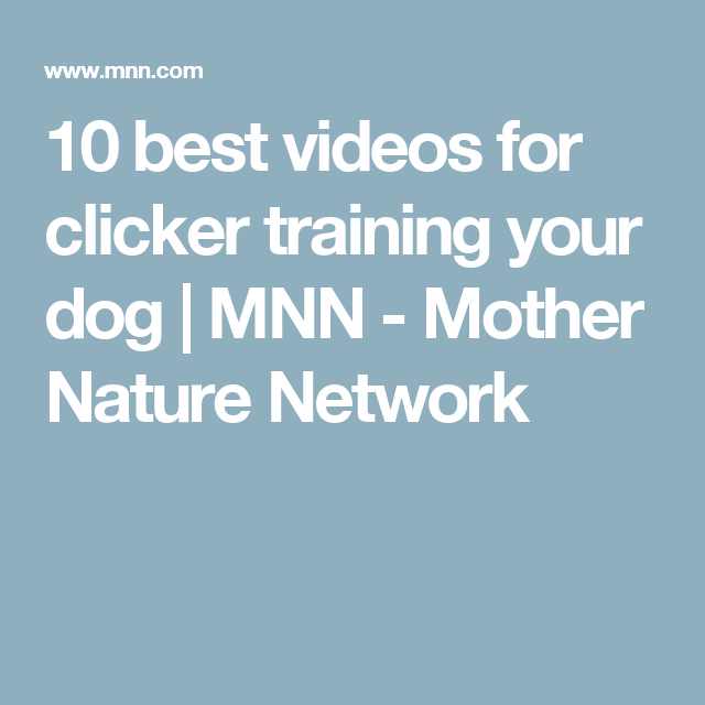 10 best videos for clicker training your dog | MNN - Mother Nature Network