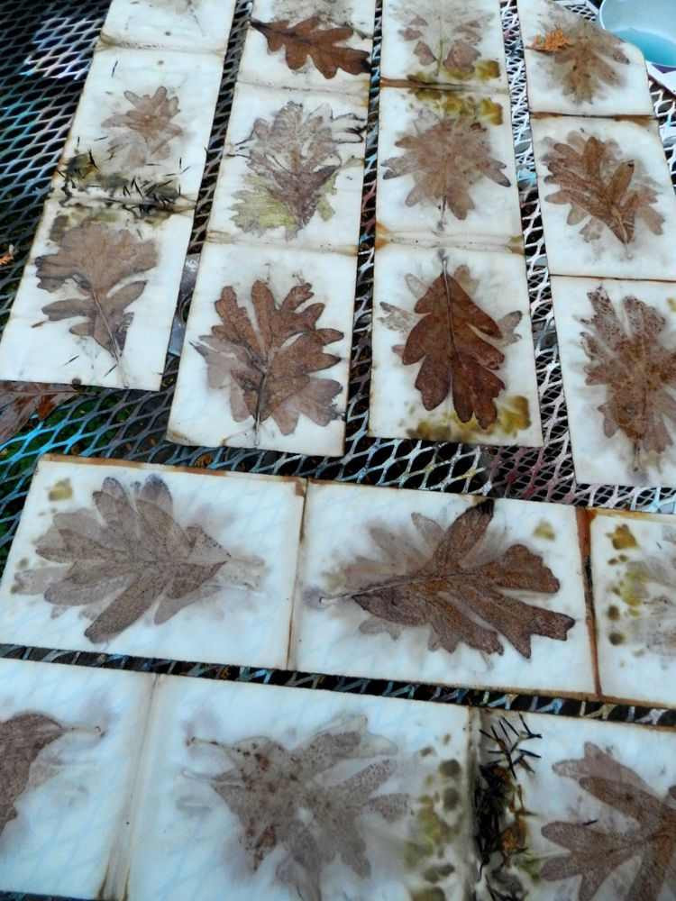 Eco printing on paper with oak leaves by Elizabeth Bunsen.
