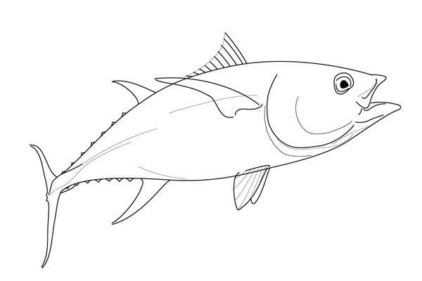 Drawing Of A Yellowfin Tuna On Behance Yellowfin Tuna Drawing Images Drawings