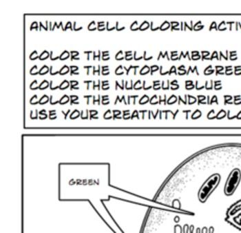 Plant Animal Cells coloring activity worksheet 6th 7th 8th high
