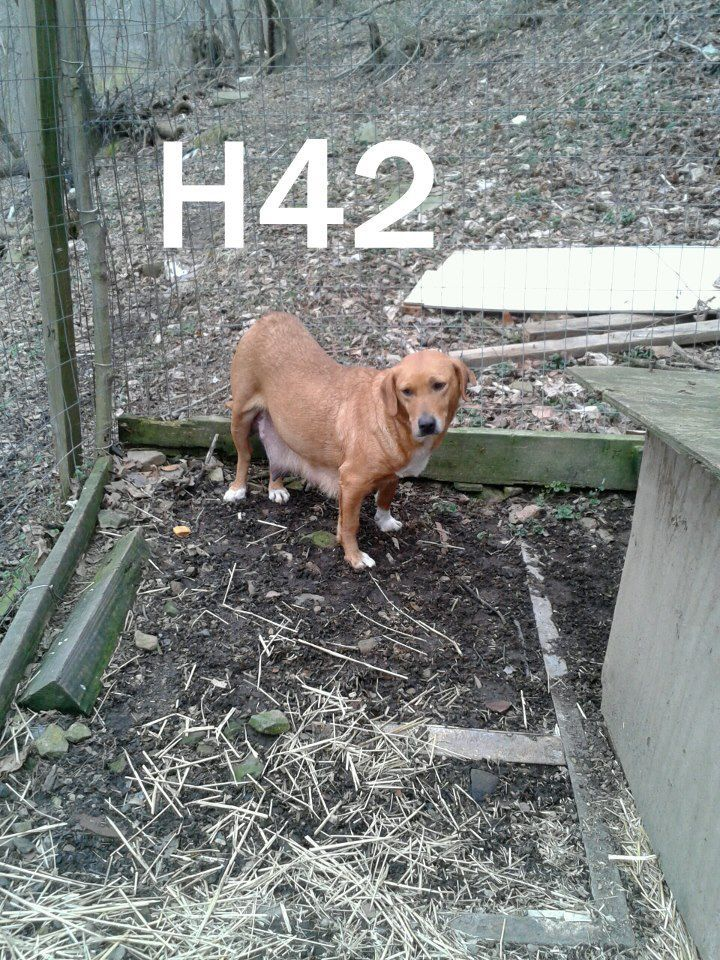URGENT!! This is the momma of the puppies. She needs
