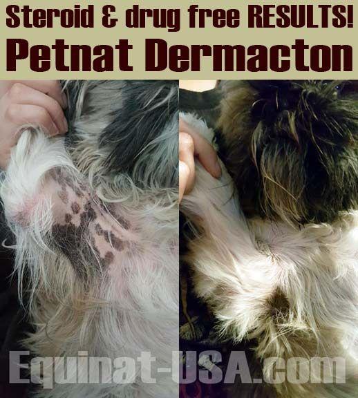 Shih Tzu Dog Hair Loss Recovery Dog Hair Loss Shih Tzu Dog