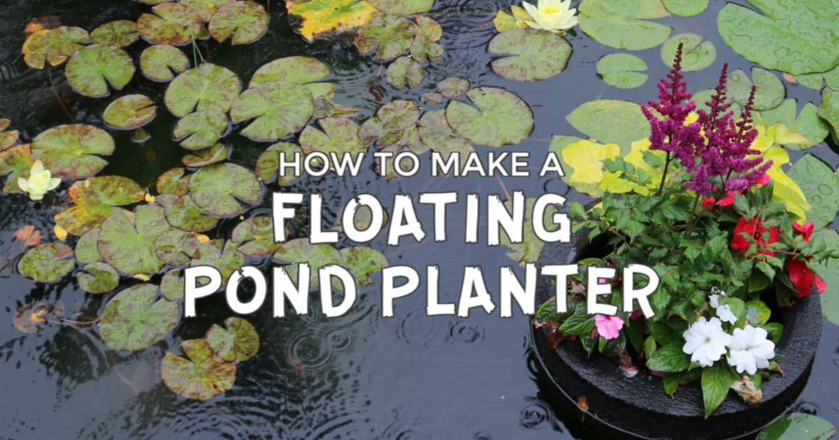 How To Make A Floating Pond Planter Floating Pond Plants Pond Plants Planters