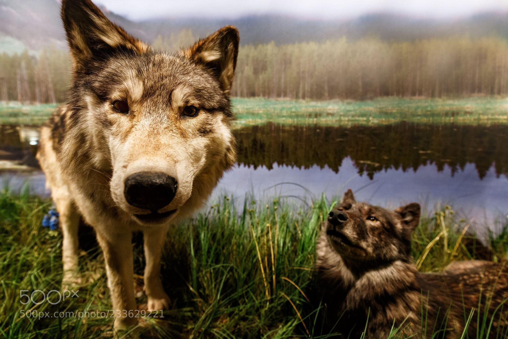 Badezimmer Reuter ~ The wolf thomas reuter gera deutschland #canon eos 6d