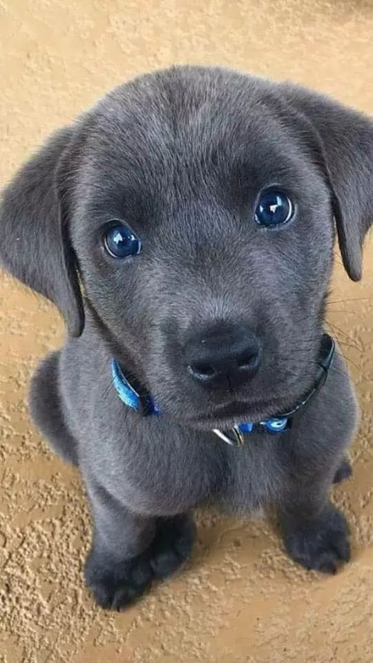 Pin by Ava bloomfield on Animals Cute dogs, Cute puppies