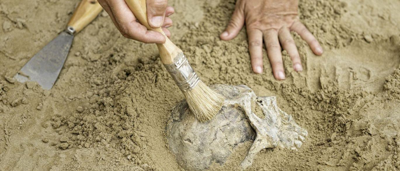InfoNavWeb                       Informação, Notícias,Videos, Diversão, Games e Tecnologia.  : Fósseis mais antigos do Homo sapiens são achados n...