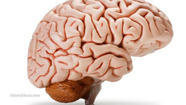Over-the-counter medications eat your brain, say scientists
