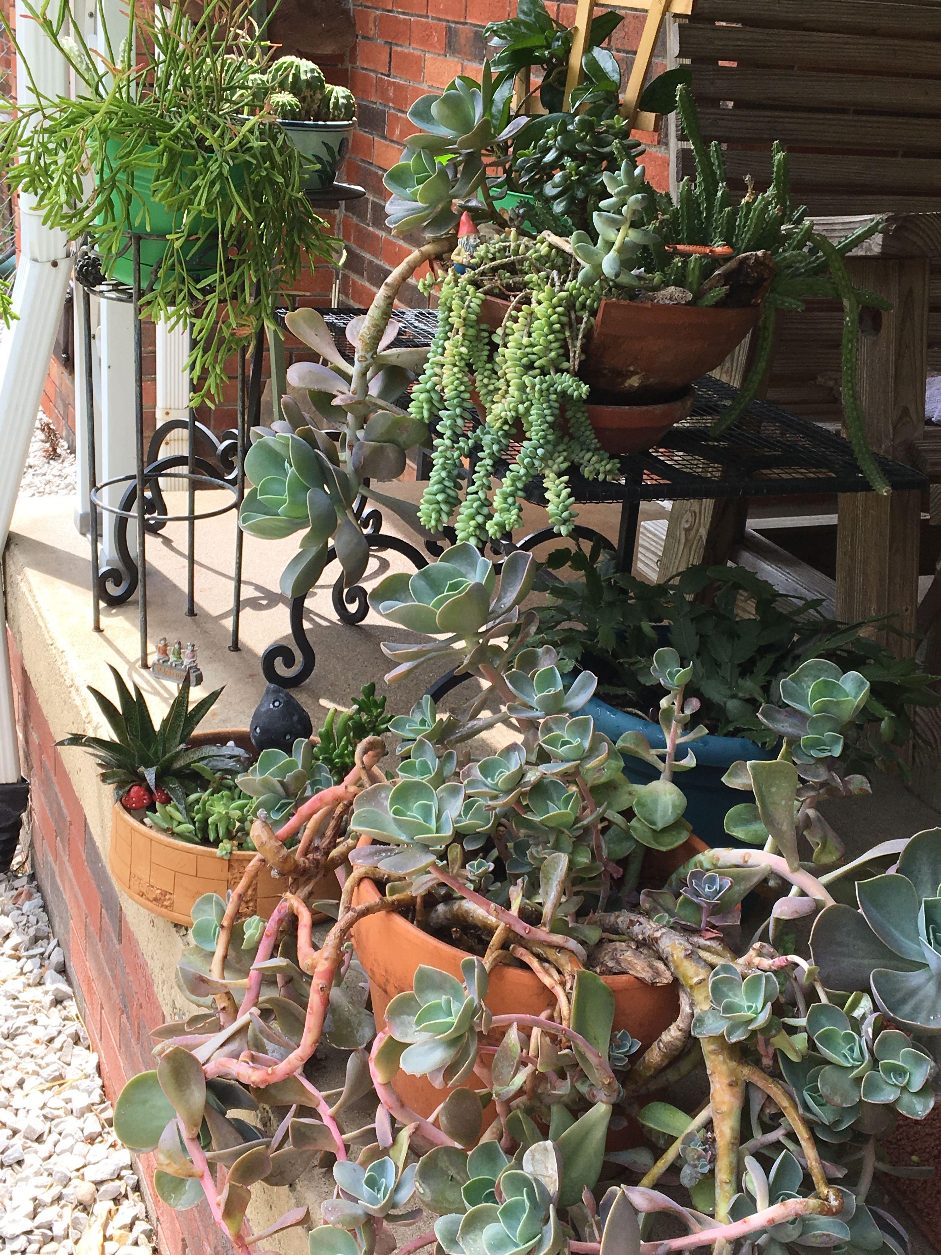 Succulents Garden, Gardens, Outdoor Gardens, Garden, House Gardens