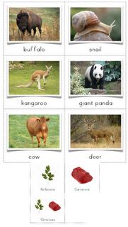 Herbivore, Carnivore, Omnivore Sorting Cards