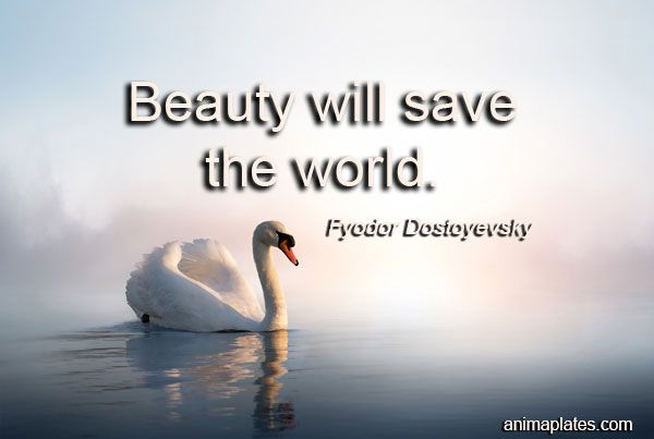 Beauty Will Save the World by Stephen S. Ashley | Blurb Books