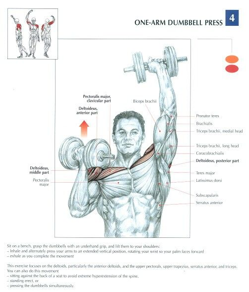 Shoulder Press Muscle Diagram All Kind Of Wiring Diagrams