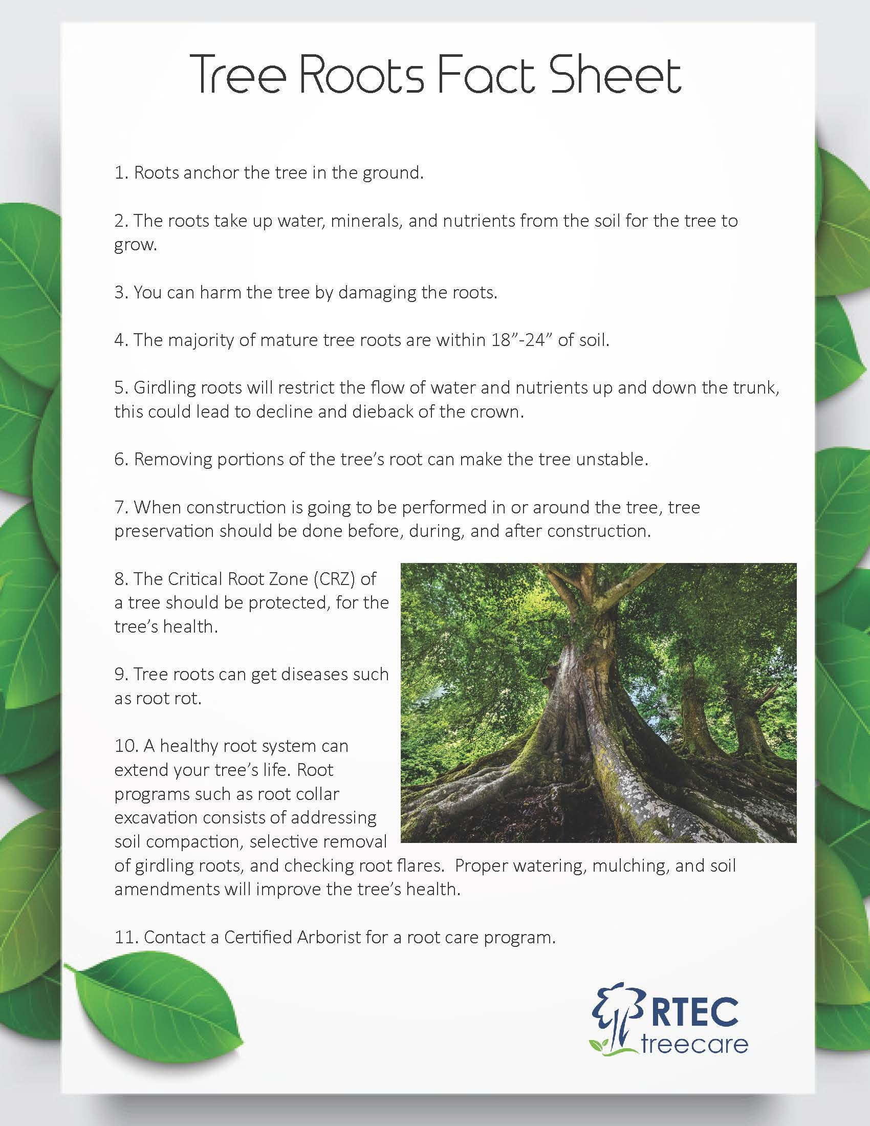 Tree Roots Fact Sheet  Tree Root Tips