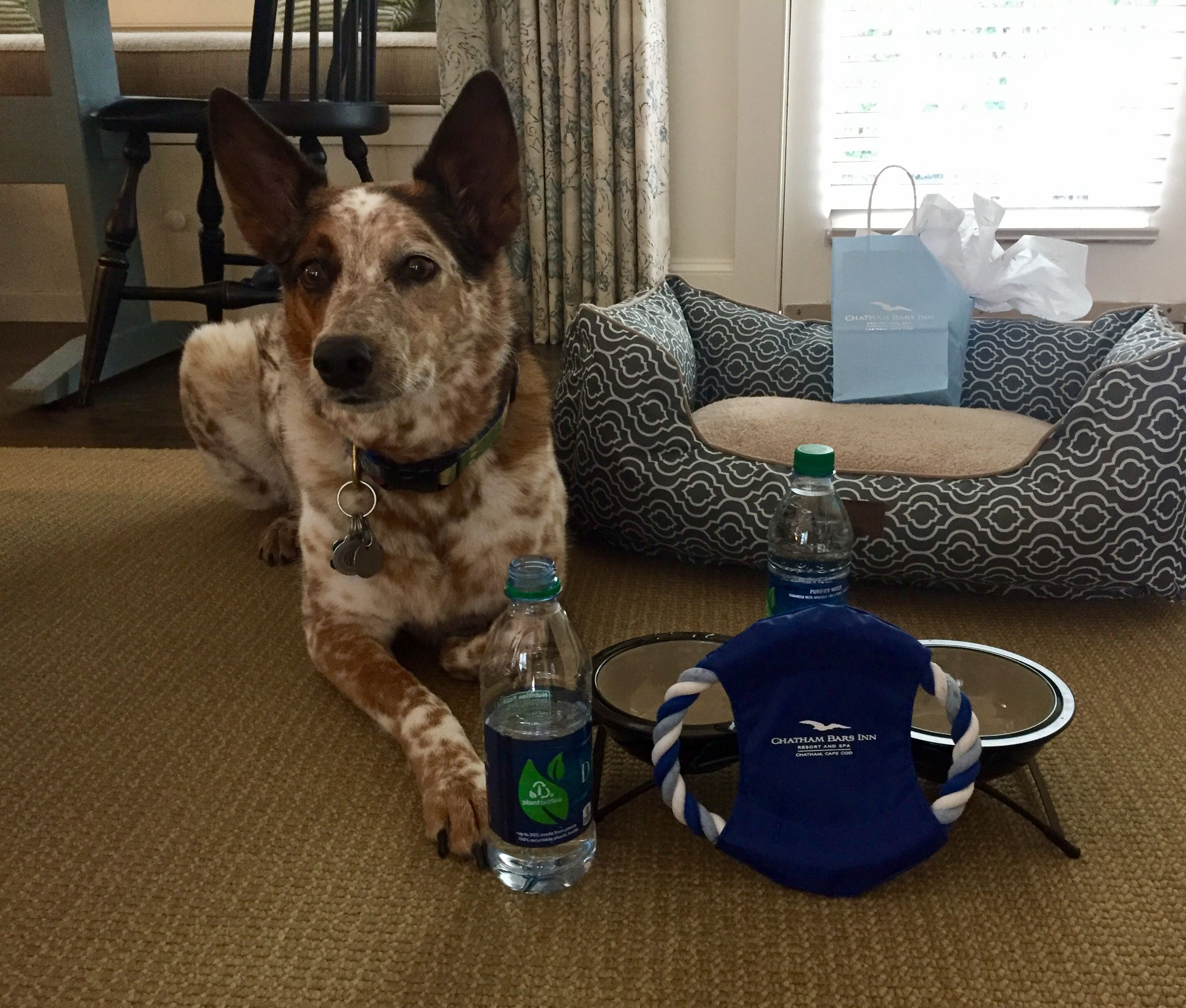 Pet Friendly Accommodations At Chatham Bars Inn On Cape Cod