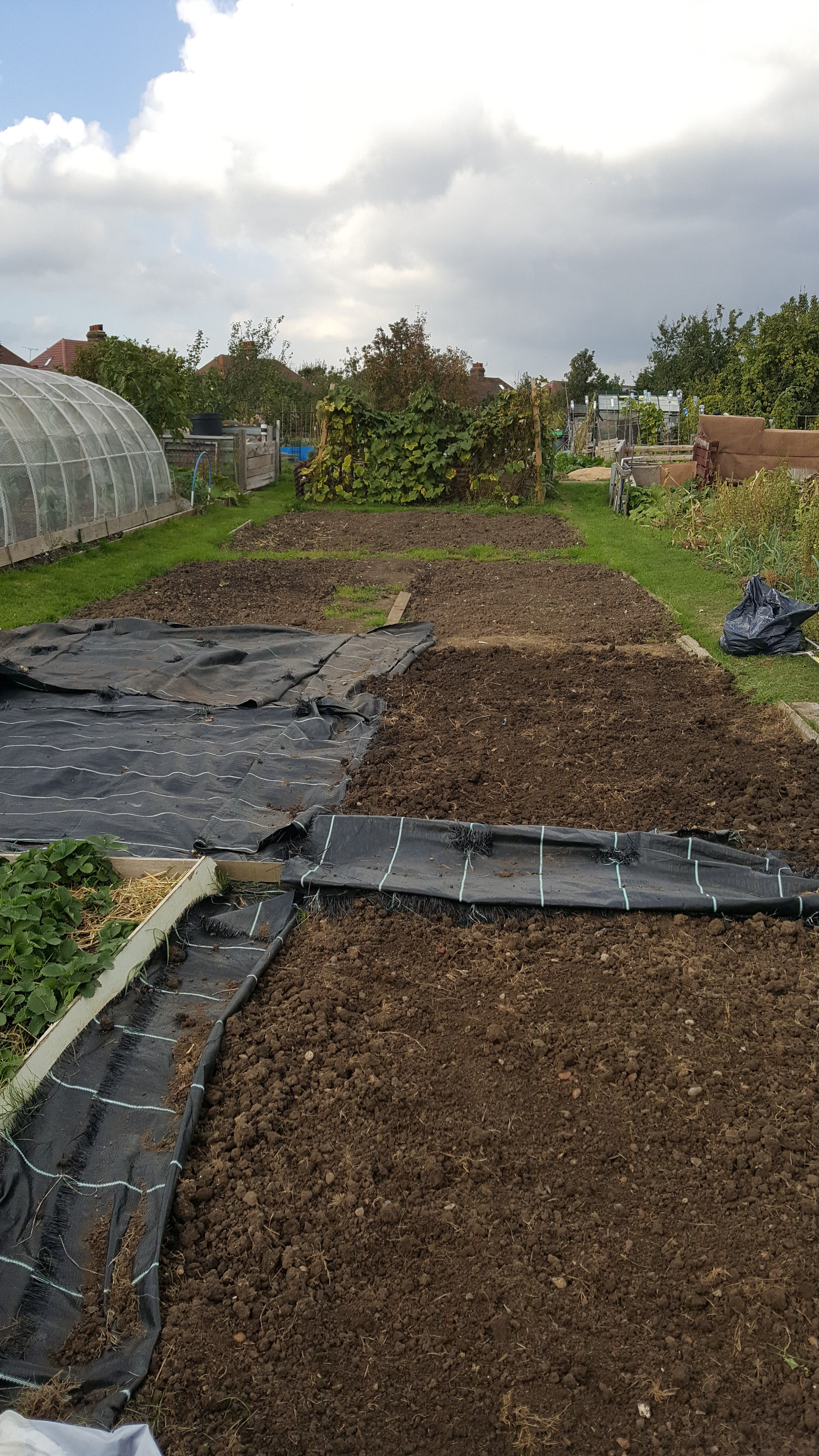 looking goood, and on target for winter. | Allotment | Pinterest ...