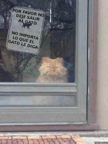 Imagenes Graciosas Para Whatsapp Memes Chistes Chistesmalos Imagenesgraciosas Humor Funny Animal Photos Funny Animal Pictures Funny Animals