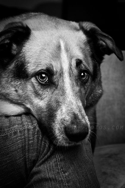 Must see Sad Black Adorable Dog - 0fe6554982b635917cfb2258635c9ee2  Photograph_959347  .jpg