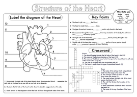 GCSE Biology: Heart Structure Worksheet Pack | Teaching ...
